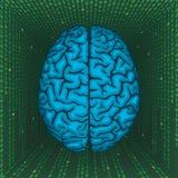 Gehirn innerhalb der digitalen Matrix. Stockfoto