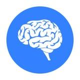 Gehirnikone in der schwarzen Art lokalisiert auf weißem Hintergrund Organsymbolvorrat-Vektorillustration Stockbild