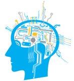 Gehirnkreisläuf Stockbild