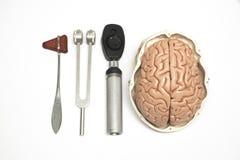 Gehirnmodell und -ausrüstung Stockfoto