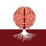 Gehirnwurzel Stockbild