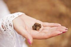 Gehouden in de palm Stock Foto