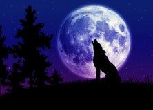 Gehuil bij de maan royalty-vrije stock afbeelding