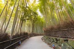 Gehweg über Bambusgarten, Kyoto Lizenzfreie Stockfotografie