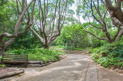 Gehweg in den nationalen botanischen Gärten Kirstenbosch Stockfotografie