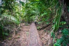 Gehweg in den Wald Lizenzfreie Stockfotografie