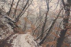 Gehweg in den Wald bedeckt im Schnee Stockbild