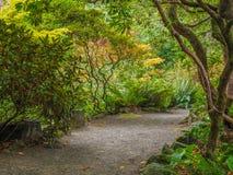 Gehweg in der Garten-Einstellung von Farnen und von Rhododendren Stockbilder