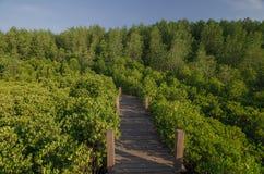 Gehweg in der Mangrove forrest stockfoto