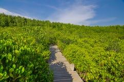 Gehweg in der Mangrove forrest stockbild