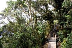 Gehweg durch ältesten moosigen Wald der Welt Stockfotografie