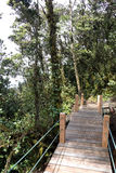 Gehweg durch ältesten moosigen Wald der Welt Stockfotos
