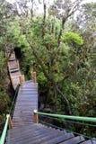 Gehweg durch ältesten moosigen Wald der Welt Lizenzfreie Stockfotos