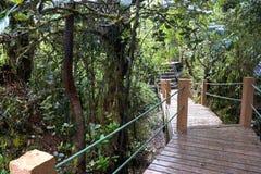 Gehweg durch ältesten moosigen Wald der Welt Lizenzfreie Stockfotografie