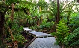 Gehweg durch den Regen-Wald Stockfoto