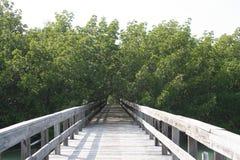 Gehweg durch die Mangroven lizenzfreies stockfoto