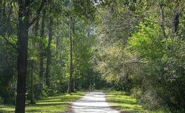 Gehweg durch Wald Stockfotografie