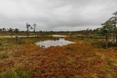 Gehweg in einem Sumpf stockfotos