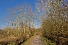 Gehweg entlang bloßer Hecke und Bäume an einem sonnigen Wintertag mit klarem blauem Himmel stockbild