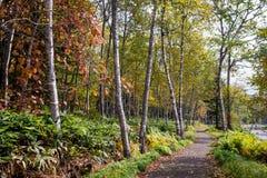 Gehweg entlang dem Wald Stockbild