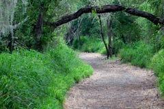 Gehweg entlang den Bäumen stockfotografie