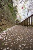Gehweg im Frühjahr verziert mit Sakura Festival-Laternen an Asukayama-Park in Kita, Tokyo, Japan Mit Kirschblüte-Blumenblättern a Lizenzfreies Stockfoto