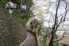 Gehweg im Frühjahr verziert mit Sakura Festival-Laternen an Asukayama-Park in Kita, Tokyo, Japan Mit Kirschblüte-Blumenblättern a Stockbild