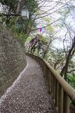 Gehweg im Frühjahr verziert mit Sakura Festival-Laternen an Asukayama-Park in Kita, Tokyo, Japan Mit Kirschblüte-Blumenblättern a Lizenzfreie Stockfotos