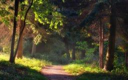 Gehweg im Garten lizenzfreies stockfoto