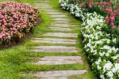 Gehweg im Garten mit Gras und Blume Stockbilder