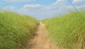 Gehweg im Gras stockfoto