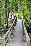 Gehweg im Nationalpark. Lizenzfreie Stockfotografie