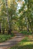 Gehweg im Park Lizenzfreie Stockfotografie