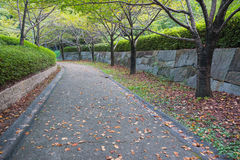 Gehweg im Park Stockbild