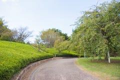Gehweg im Park Stockfotos