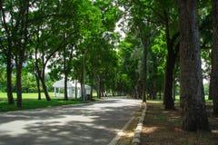 Gehweg im Park Stockbilder