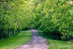 Gehweg im Wald Stockfotos