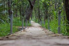 Gehweg im Wald Stockbilder