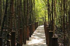 Gehweg im Wald Lizenzfreie Stockfotos