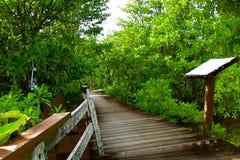 Gehweg in Krabi-Mangroven-Wald Lizenzfreie Stockfotos