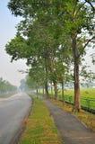 Gehweg mit Bäumen an einem dunstigen Morgen Stockfotografie