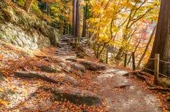 Gehweg mit buntem Autumn Leaf Lizenzfreies Stockbild