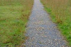 Gehweg mit grünem Gras im Garten Lizenzfreies Stockbild