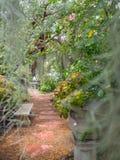 Gehweg tief herein zum Park mit spanischem Moos verwischte Vordergrund Stockbild