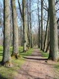 Gehweg und schöne alte Bäume Lizenzfreies Stockfoto