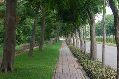 Gehweg unter Bäumen Lizenzfreie Stockfotos