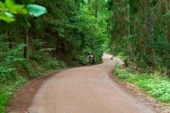 Gehweg von hohen alten grünen Bäumen, der alte Schotterweg zwischen den hohen Bäumen Lizenzfreie Stockfotos