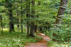 Gehweg-Weg-Weg mit grünen Bäumen in Forest Beautiful Alley In Park Bahn-Weise durch dunklen Wald Stockfotografie