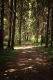Gehweg-Weg-Weg mit grünen Bäumen im Wald Lizenzfreie Stockfotos