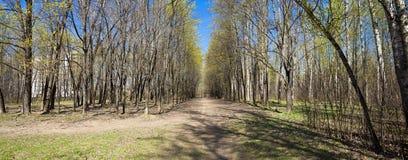 Gehweg-Weg-Weg-im Frühjahr Wald Stockfotografie